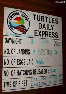 Turtles Daily Express